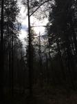 En fruktansvärd tanke att en skulle gå mot sin egen avrättning genom skogen.